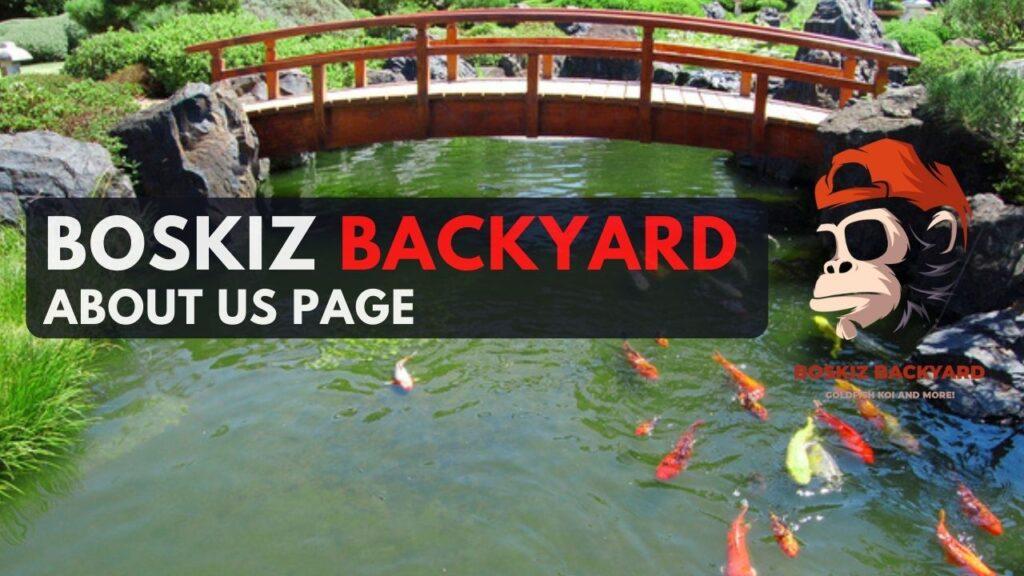 boskiz about us page