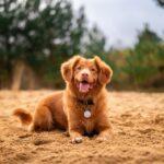 part pet dog