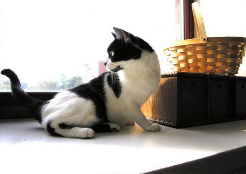 pet cat 1561824 640x454 1