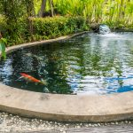 koi fish garden pond